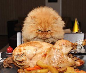 Les normes et recommandations nutritionnelles des chats sous-estiment la part des protéines.
