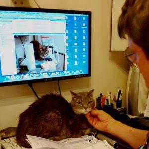 Un vétérinaire spécialiste des chats exerçant à Paris.
