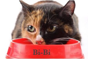 """La bi-nutrition, une solution pour """"mieux nourrir son chat""""."""