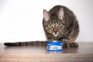 Est-ce que je peux donner du poisson à mon chat ? Mon chat adore le thon en boite, mais il parait que n'est pas bon pour lui.