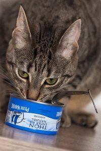Le thon en boite est une véritable addiction pour certain chats. On les surnomment les «tuna junkies».