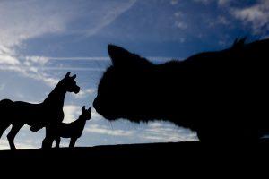 Même si le cheval n'est qu'un zèbre domestique que les grands chats d'Afrique apprécient d'avoir à leur menu, ce n'est pas l'espèce animale que l'on s'attend à trouver dans le Ronron de notre chat.