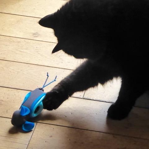 stériliser son chat gratuitement en idf